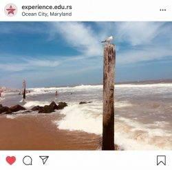 Work and Travel lokacija Ocean City